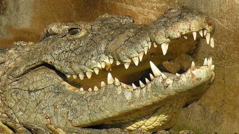 Riverbend Crocodile Café