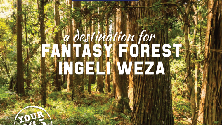 Discover the Ingeli Forest and surrounds