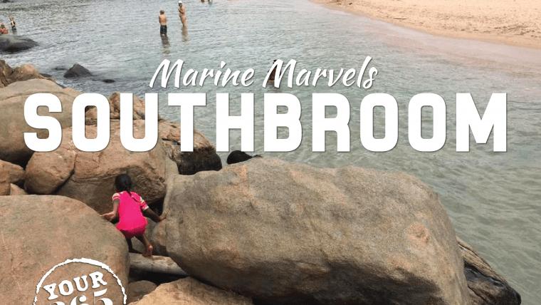Southbroom's Marine Marvels