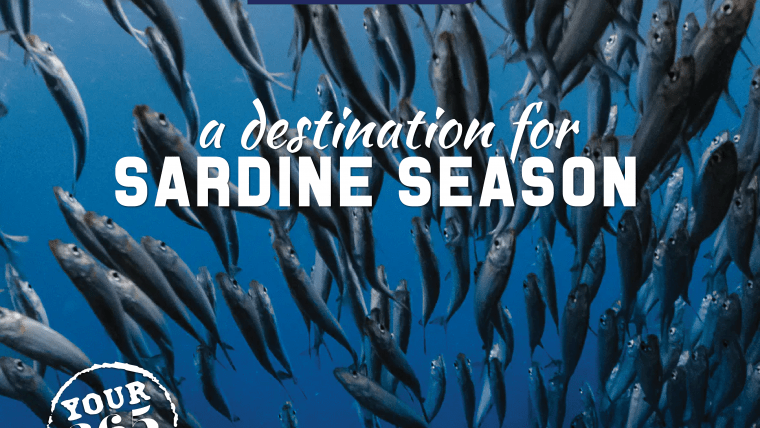 The Sardine Run